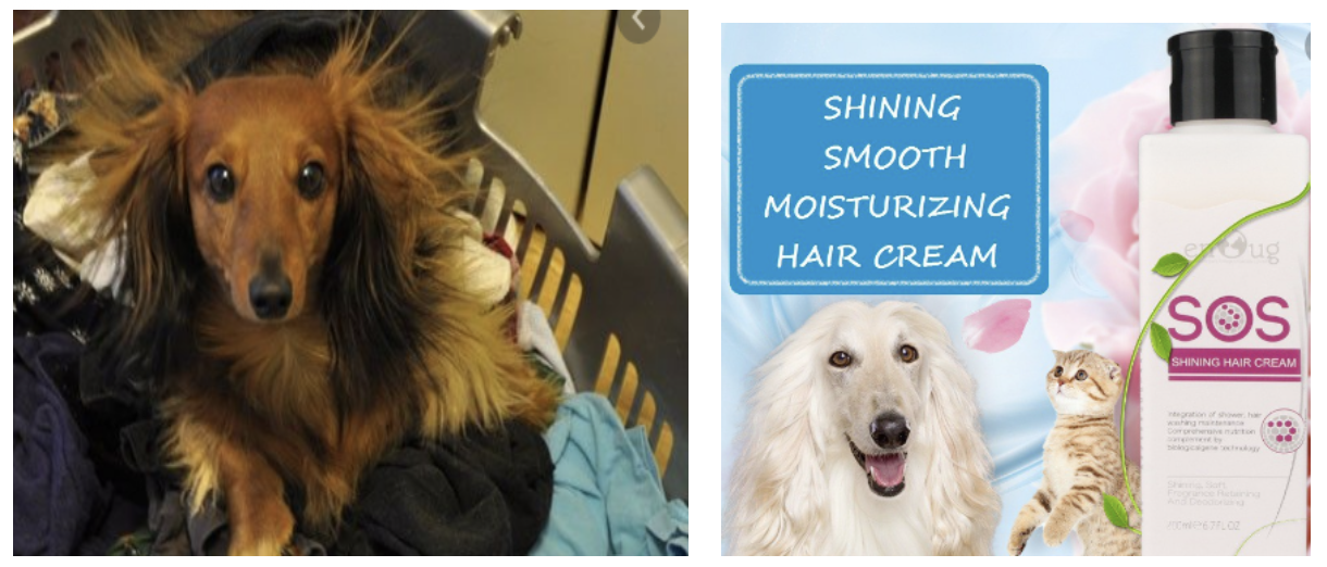 dogs with static hair